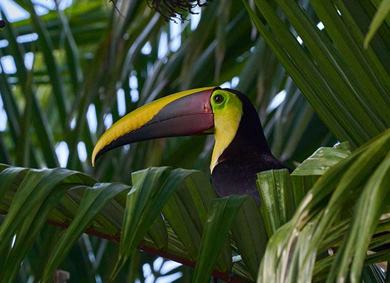 Ecotourism in Costa Rica